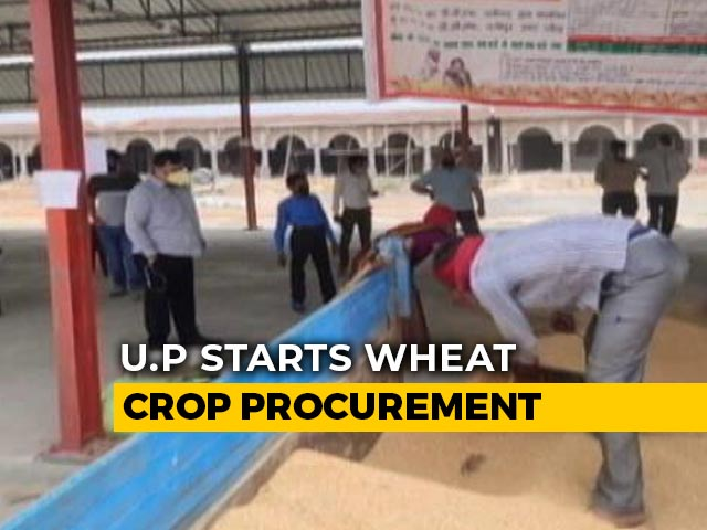 Video : Amid Lockdown, UP Starts Buying Grain From Farmers