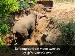 अचानक 15 फीट गहरी खाई में जा गिरा हाथी, कई घंटों तक चीखता रहा, किसान ने देखते ही किया ऐसा... देखें Video