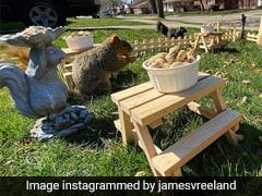 Lockdown के बीच इस शख्स ने अपने घर के गार्डन में जानवरों के लिए बनाया मिनी रेस्टोरेंट, देखें Viral Video