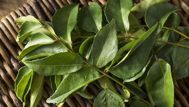 Curry Leaves Drink For Weight Loss: If You Are Troubled By The Problem Of Obesity, Then Consume Curry Leaves Like This