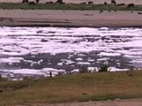 Video : Industrial Waste Still Visible On Yamuna Despite COVID-19 Lockdown