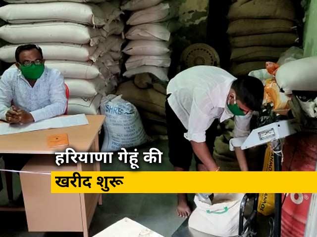 Video : Lockdown update: हरियाणा में आज गेहूं की खरीद हो रही है शुरू, राज्य 1800 से ज्यादा खरीद केंद्र