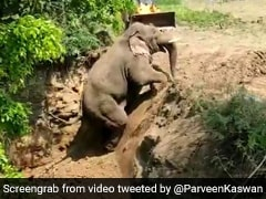 Rescuers Cheer As Elephant Climbs Out Of 15-Foot Ditch In Andhra. Watch