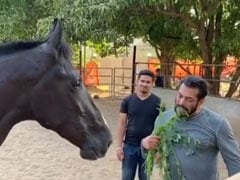 Salman Khan Had Breakfast With His Horse - True Story. Guess What They Ate?