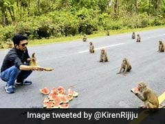 A Troop Of Monkeys Teaches Social Distancing In Kiren Rijiju's Pic
