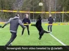Watch: Dogs Super Volleyball Skills Sends Twitter Into Frenzy