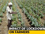 Video : Assam Farmers Stare At Catastrophe Amid Coronavirus Lockdown