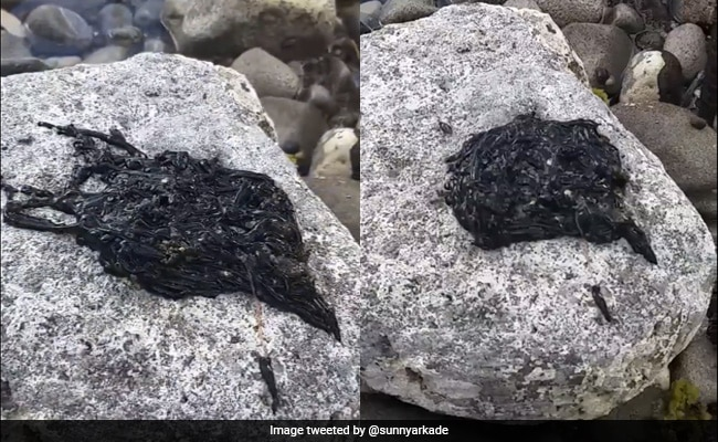 Viral Video Of Bizarre Black Creature Has Millions Confused