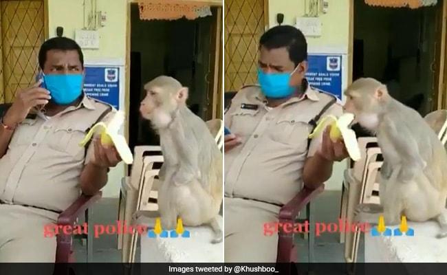 हार्टवार्मिंग वीडियो में, कॉप रोगी को केले को बिना हाथों के बंदर को खिलाता है