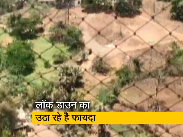 Videos : Covid-19: लॉक डाउन की आड़ में मुंबई की आरे कॉलोनी में काटे जा रहे हैं पेड़