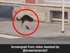 चूहे-बिल्ली के बीच हुई खतरनाक जंग, चूहे के Attack से हवा में उछल गई बिल्ली और फिर... देखें Video