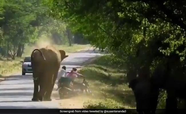 Attack करने भागा हाथी तो शख्स ने घुमा दी बाइक, नीचे गिरा तो गुस्से में जानवर ने किया ऐसा... देखें Shocking Video