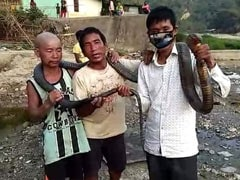 Amid Lockdown, Arunachal Hunters Kill King Cobra For Meal