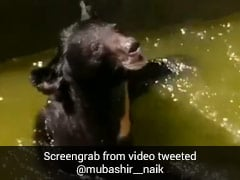 Wild Bear Rescued From 11-Feet Deep Water Reservoir In J&K's Doda