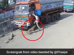 Stray Dogs Corner Leopard After It Attacks Man In Hyderabad. Watch