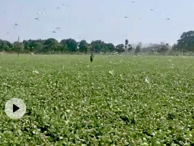टिड्डियों का हमला  (Locust Attack) : झांसी में फायर ब्रिगेड को 'केमिकल अटैक' के लिए तैयार रहने का आदेश