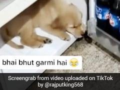 लगी इतनी तेज गर्मी, मालकिन ने खोला फ्रिज तो अंदर जाकर लेट गया कुत्ता और फिर... देखें Video