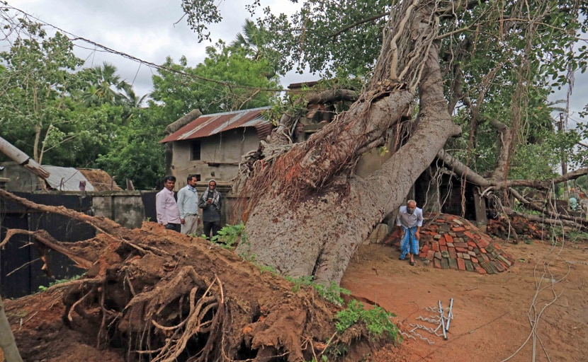 Death Count Due To Cyclone Amphan Rises To 98 In Bengal: Mamata Banerjee