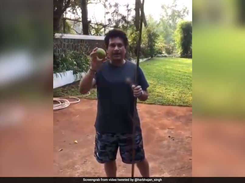 Watch: Sachin Tendulkar Plucks Lemons From Tree Using Bamboo Stick, Harbhajan Singh Requests Some For Himself