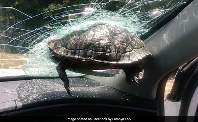कांच को तोड़कर कार में घुसा कछुआ, हैरान लोग बोले- 'उड़ कैसे सकता है...' - देखें Viral Video