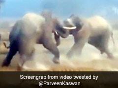 दो हाथियों के बीच हुई खतरनाक जंग, एक-दूसरे को मारी सूंड और फिर हुआ ऐसा... देखें फाइट का पूरा Video