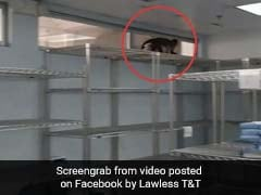 Hospital Denies Finding Snake In Operating Room. Only A Monkey, They Say