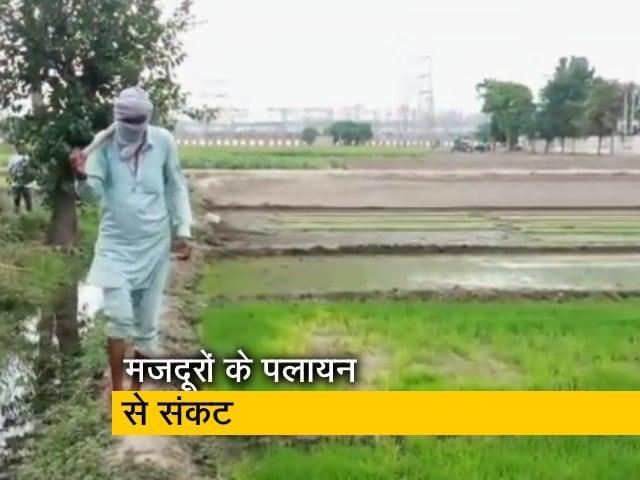 Videos : पंजाब : कोरोना से मजदूरों का पलायन और गांव में सामाजिक दरार