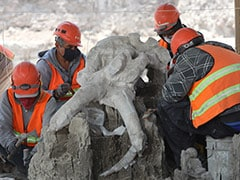 Mammoth Skeletons Dug Up At Mexico City Airport Construction Site