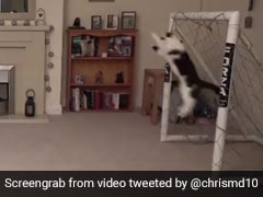 Watch: This Cat's Goalkeeping Is The Best Thing You Will See Today
