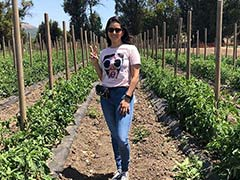 Sunny Leone's Los Angeles Life Is Filled With Farm Fresh Veg And Walks In The Park