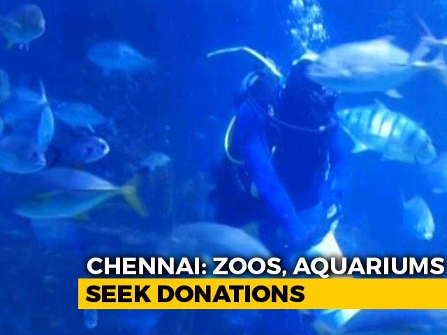 Video : Amid Fund Crunch, Chennai Aquarium Offers Virtual Adoption Of Fish