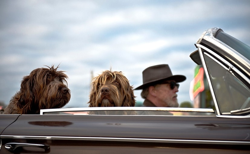 People Travelling With A Dog Drive More Cautiously: Study