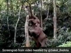 कटहल खाने के चक्कर में पेड़ पर चढ़ा हाथी, वीडियो हुआ वायरल