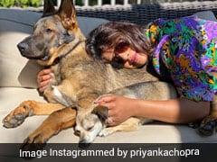 प्रियंका चोपड़ा की तरह अपने समर लुक को बनाएं ब्राइट, देखें Photos