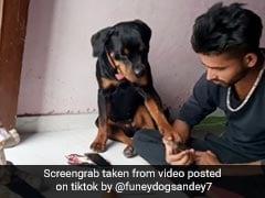 लॉकडाउन में कुत्ते के साथ खेल रहा था शख्स, चीटिंग की तो कुत्ते ने किया कुछ ऐसा, देखें TikTok Viral Video