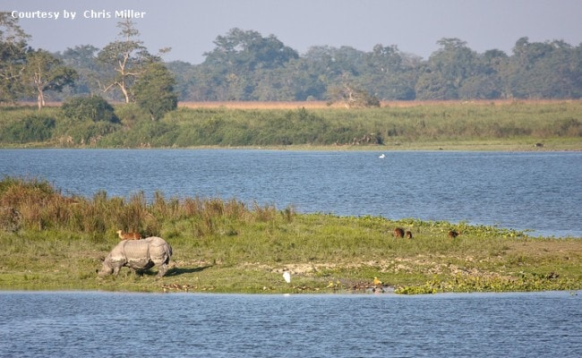 Row Over 2 Environment Clearances In Protected Wildlife Areas In Assam