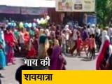 Videos : गाय की शवयात्रा निकाल कर फंसे