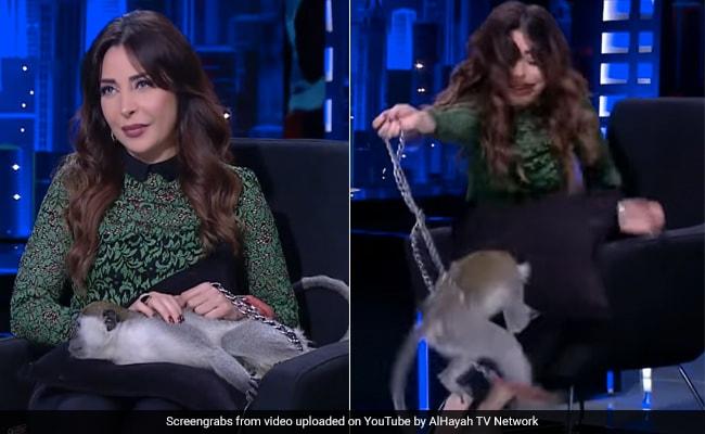Live टीवी पर होस्ट पर लपका बंदर, किया Attack तो चीख मारकर भाग खड़ी हुई महिला... देखें Video