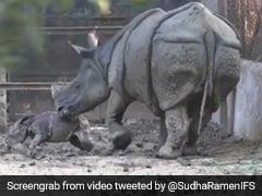 पैदा होती ही खड़े होने की कोशिश करने लगा गैंडे का बच्चा, मां ने देखते ही किया ऐसा... देखें Viral Video