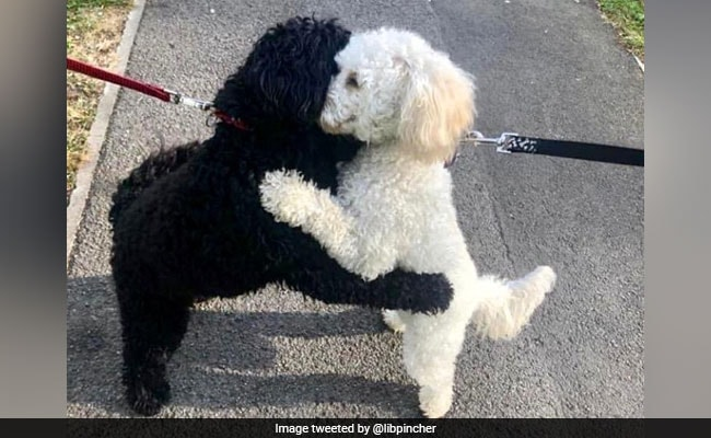 Two Long-Lost Dog Siblings Hug In Pics That Have The Internet Saying 'Aww'
