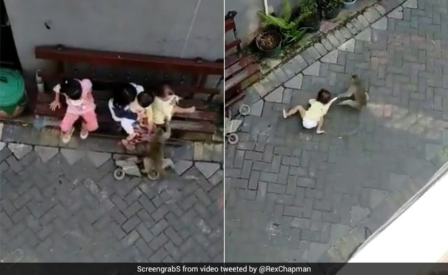 Monkey Riding A Bike Grabs Toddler, Drags Her In Shocking Video