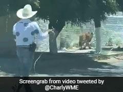 सड़क पर आया बाघ तो शख्स ने गले पर फेंका रस्सी का फंदा, फिर हुआ कुछ ऐसा... देखें Bizarre Video