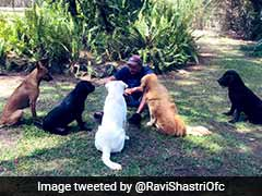 """Shastris """"Social Distancing Huddle"""" With Dogs A Massive Hit On Twitter"""