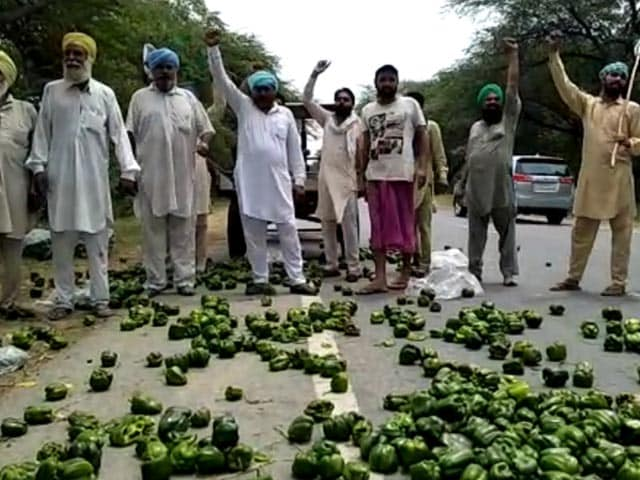 Video : Amid Lockdown, Farmers Forced To Throw Their Produce In Punjab