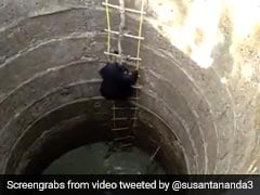 A Bear Climbs Out Of A Well In Maharashtra. Rescue Video Wins Hearts