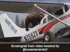 'एरो बोएरो' के अंदर घुसने की कोशिश करने लगा भालू और फिर जो हुआ...... देखें video