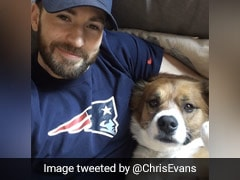 "Chris Evans Gave His Dog A Haircut In Quarantine. It Went ""So Wrong"""