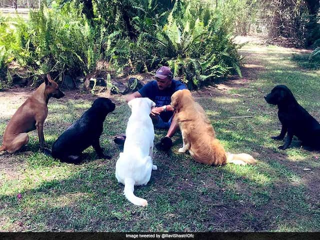 "Ravi Shastris ""Social Distancing Huddle"" With Dogs A Massive Hit On Twitter. See Pics"