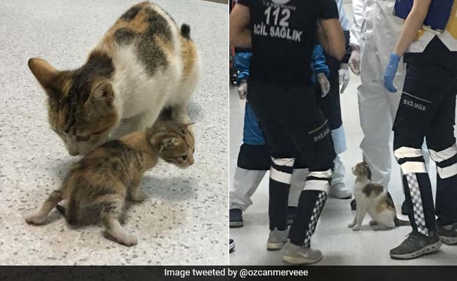 Stray Cat Brings Sick Kitten To Hospital, Medics Rush To Their Aid