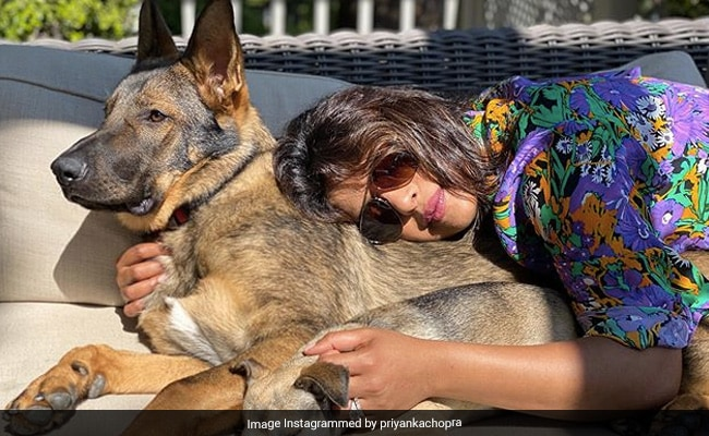 Priyanka Chopra Loves The California Sun. See Who Doubled Up As Her Pillow